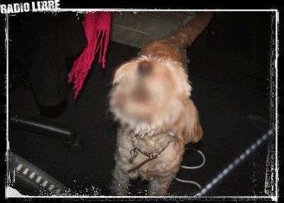 Memette le chien de Romano - R.O.M.A.N.O